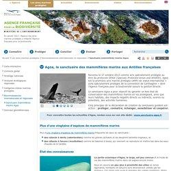 Sanctuaire mammifères marins Agoa - Reconnaissances internationales et régionales - Les aires marines protégées