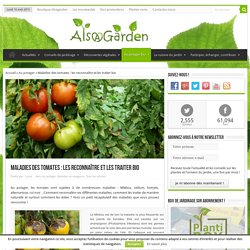 Maladies des tomates : les reconnaître et les traiter bio