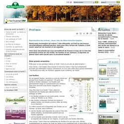 Reconnaître les arbres : deux clés de détermination papier