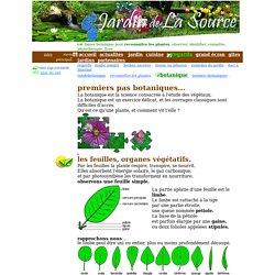 reconnaître plantes, bases botaniques, flore, plantes, feuille, composition, disposition, fleur, inflorescence, pétales, sépales...