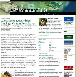 Alien Species Reconsidered: Finding a Value in Non-Natives by Carl Zimmer