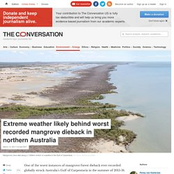 Extreme weather likely behind worst recorded mangrove dieback in northern Australia