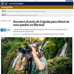 Recorrer el norte de España para observar osos pardos en libertad