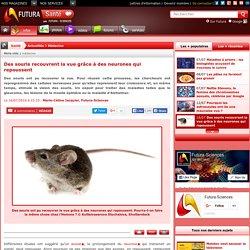 Des souris recouvrent la vue grâce à des neurones qui repoussent