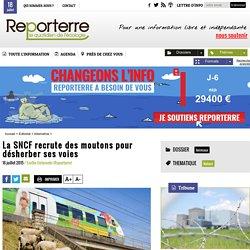 La SNCF recrute des moutons pour désherber ses voies