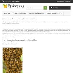 Récupérer un essaim d'abeilles - Apihappy Apiculture : Essaims, reines et miels