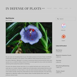 Red Nectar — In Defense of Plants