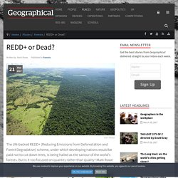 *****Global scheme: REDD+ or Dead? UN-backed REDD+ (Reducing Emissions from Deforestation and Forest Degradation)