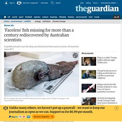 'Faceless' fish missing for more than a century rediscovered by Australian scientists