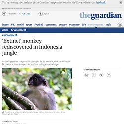 'Extinct' monkey rediscovered in Indonesia jungle