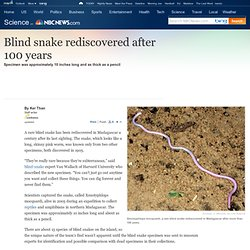 Blind snake rediscovered after 100 years - Technology & science - Science - LiveScience