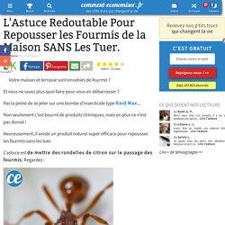 L'Astuce Redoutable Pour Repousser les Fourmis de la Maison SANS Les Tuer