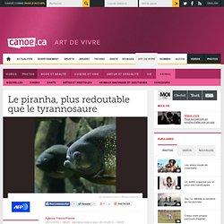 Le piranha, plus redoutable que le tyrannosaure