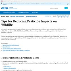 #7 Tips for Reducing Pesticide Impacts on Wildlife