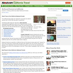 Redwood Forests in California - Guide to Visiting California's Best Redwood Forests