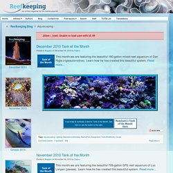 Reefkeeping Blog