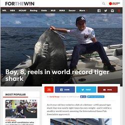 Boy, 8, reels in world record tiger shark
