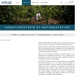 Projet de reforestation : l'agroforesterie au service de la reforestation - Pur ProjetPur projet