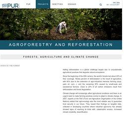 Reforestation project : agroforestry, a smart integration of trees for reforestation - Pur ProjetPur Projet