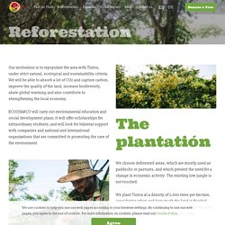 Forest Restoration Mexico