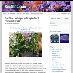 "Best Plants and Algae for Refugia - Part II ""Vegetable Filters"""