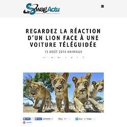Regardez comment réagit un lion face à une voiture téléguidée