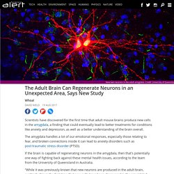 The adult brain can regenerate neurons in an unexpected area, says new study