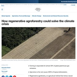 WORLD ECONOMIC FORUM - DEC 2019 - How regenerative agroforestry could solve the climate crisis