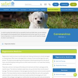 Regenerative Stem Cell Therapy & Medicine for dogs in Texas