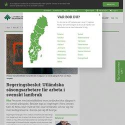 Regeringsbeslut: Utländska säsongsarbetare får arbeta i svenskt lantbruk - LRF
