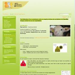 INSTITUT DE L ELEVAGE 18/06/13 Identification électronique ovine et caprine : les subventions cessent, l'identification continue