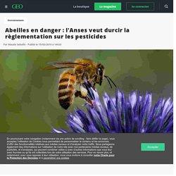 Abeilles en danger : l'Anses veut durcir la règlementation sur les pesticides - Geo