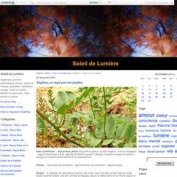Réglisse, un régal pour les papilles - Soleil de Lumière