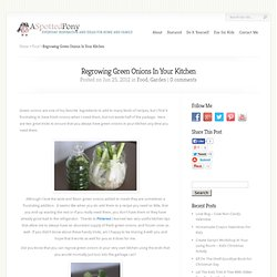Regrowing Green Onions In Your Kitchen | A Spotted Pony