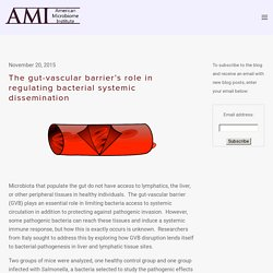 The gut-vascular barrier's role in regulating bacterial systemic dissemination — The American Microbiome Institute
