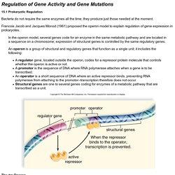 Regulation of Gene Activity and Gene Mutations