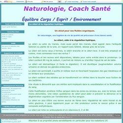 Le céleri et la régulation hydrique. - Naturologie, Coach Santé