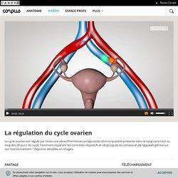 La régulation du cycle ovarien - Corpus - réseau Canopé