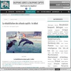 La réhabilitation des cétacés captifs : le débat - Dauphinlibre.be