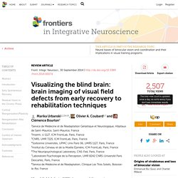 Visualizing the blind brain: brain imaging of visual field defects from early recovery to rehabilitation techniques