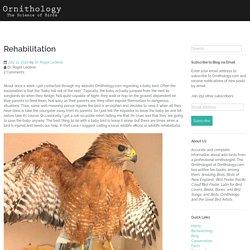 Rehabilitation – Ornithology