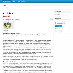 Réinsertion professionnelle et activités culturelles