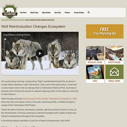 Wolf Reintroduction Changes Ecosystem