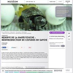 Réserve de la Haute-Touche : réintroduction de cistudes en Savoie