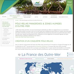 Pôle-relais Zones Humides d'Outre-mer » Pôle-relais Mangroves & Zones Humides d'Outre-mer