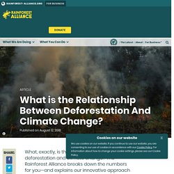 What is the Relationship Between Deforestation And Climate Change?