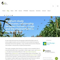 Sorghum study illuminates relationship between humans, crops and the environment in domestication - The Global Plant Council