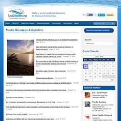 Media Releases & Bulletins