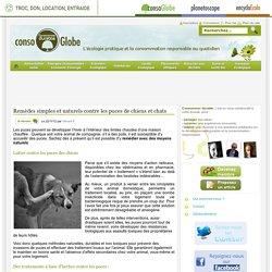 Remèdes simples et naturels contre les puces de chiens et chats - Consommer Durable Consommer Durable