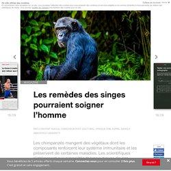 Les remèdes des singes pourraient soigner l'homme - Edition du soir Ouest France - 05/06/2018